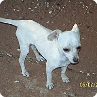 Adopt A Pet :: Joey - Andrews, TX