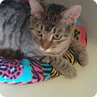 Adopt A Pet :: Topaz - Greenville, IL