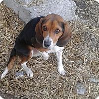 Adopt A Pet :: Bou - Northumberland, ON