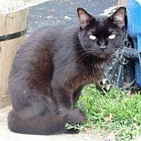Adopt A Pet :: Tarbaby - Nolensville, TN