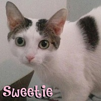 Adopt A Pet :: Sweetie - Covington, KY
