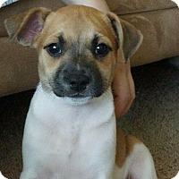 Adopt A Pet :: LadyBird - Gainesville, FL