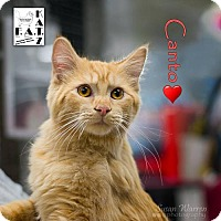 Adopt A Pet :: Canto - Albuquerque, NM