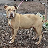 Adopt A Pet :: Angie - Yreka, CA