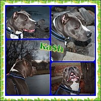 Adopt A Pet :: Kash - Louisiana, MO
