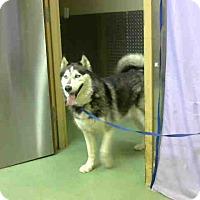 Adopt A Pet :: URGENT 4/25 @ DEVORE - San Bernardino, CA