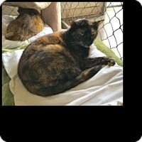 Adopt A Pet :: Hisser - Fallbrook, CA