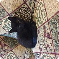 Adopt A Pet :: Middie GORGEOUS - Tunica, MS