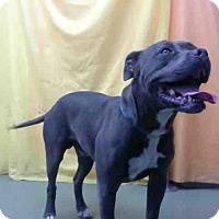 Adopt A Pet :: URGENT on 5/23@Devore San Bern - San Bernardino, CA