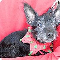 Adopt A Pet :: Mark - Umatilla, FL
