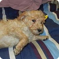 Adopt A Pet :: Grady - Antioch, IL