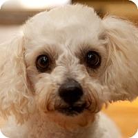 Adopt A Pet :: Willow - La Costa, CA