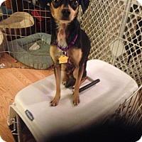 Adopt A Pet :: Prince #439 - Seattle, WA