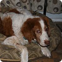 Adopt A Pet :: Rex - Albuquerque, NM