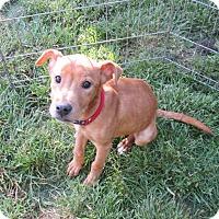 Adopt A Pet :: Casi - West Warwick, RI