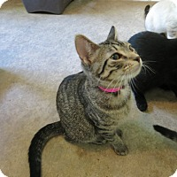 Adopt A Pet :: Lucinda - Geneseo, IL