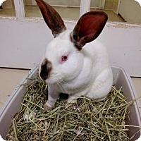 Adopt A Pet :: Morrison - Oak Park, IL