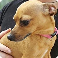 Adopt A Pet :: Cindy - DeLand, FL