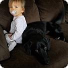 Adopt A Pet :: Lady Luck