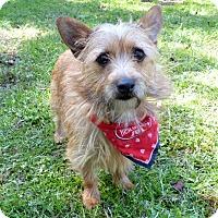 Adopt A Pet :: Judd - Mocksville, NC