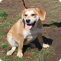 Adopt A Pet :: Emma - Columbia, TN