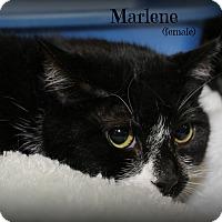 Adopt A Pet :: Marlene - Springfield, PA