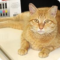 Adopt A Pet :: Mono - Harrison, NY