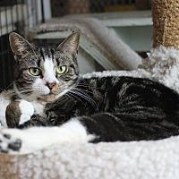 Adopt A Pet :: Kennedy - Carlisle, PA