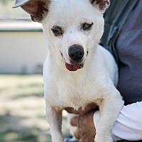 Adopt A Pet :: Snowflake - Creston, CA