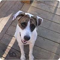 Adopt A Pet :: Jade in Houston - Houston, TX
