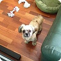 Adopt A Pet :: Mocha - Davie, FL