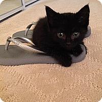 Adopt A Pet :: Louisa - Santa Monica, CA