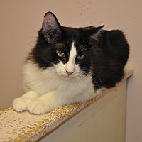 Adopt A Pet :: Duff - West Hartford, CT