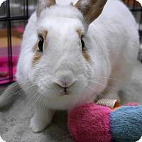 Adopt A Pet :: Moma - Montclair, CA