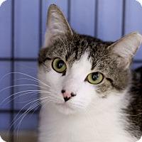 Adopt A Pet :: Bismark - Chicago, IL