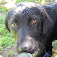 Adopt A Pet :: *Alonzo - PENDING - Westport, CT