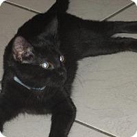 Adopt A Pet :: Zoey - Owatonna, MN