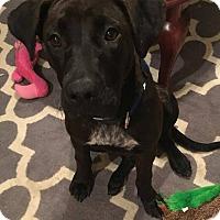 Adopt A Pet :: Ruthie Jane - Huntsville, AL