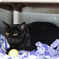Adopt A Pet :: Dobby - Wheaton, IL