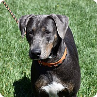 Adopt A Pet :: Misty - Concord, CA