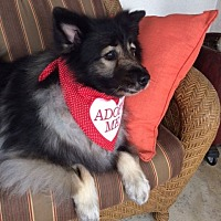 Adopt A Pet :: KATIE--ADOPTED WITH MADI! - Southern California, CA
