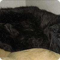 Adopt A Pet :: Bill - Duncan, BC