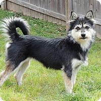 Adopt A Pet :: Maddison - Joplin, MO