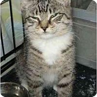 Adopt A Pet :: Ramona - Boston, MA