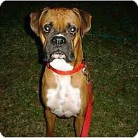 Adopt A Pet :: Marlin - Navarre, FL