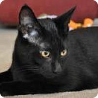 Adopt A Pet :: Mac - Port Republic, MD