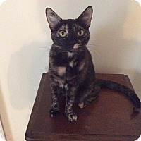 Adopt A Pet :: SWEETIE PIE: Urgent - Madison, AL