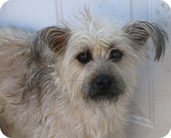 Terrier (Unknown Type, Small) Mix Dog for adoption in Woonsocket, Rhode Island - Lemon Drop - MEET ME