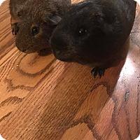 Adopt A Pet :: Jupiter - Fort Worth, TX