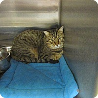 Adopt A Pet :: Teddy - Grand Junction, CO